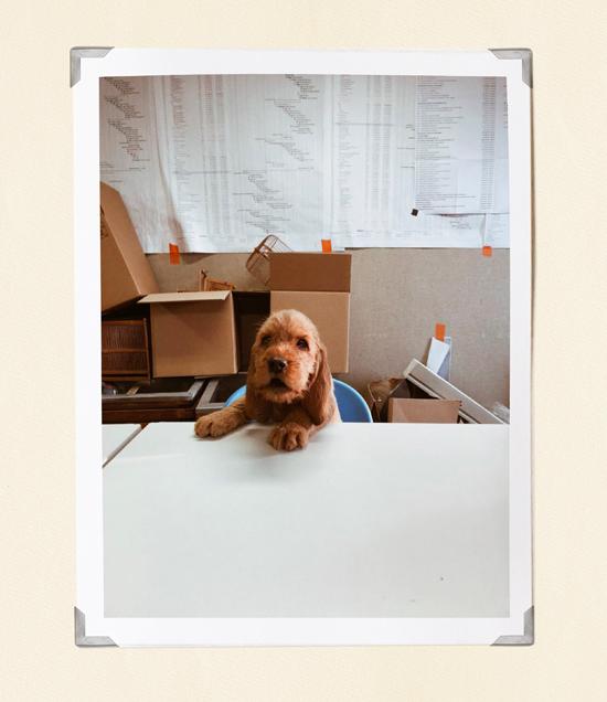 equipements high tech_chien au bureau