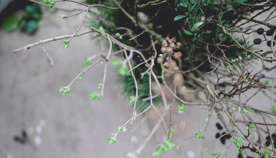 plaisir inattendu_branches